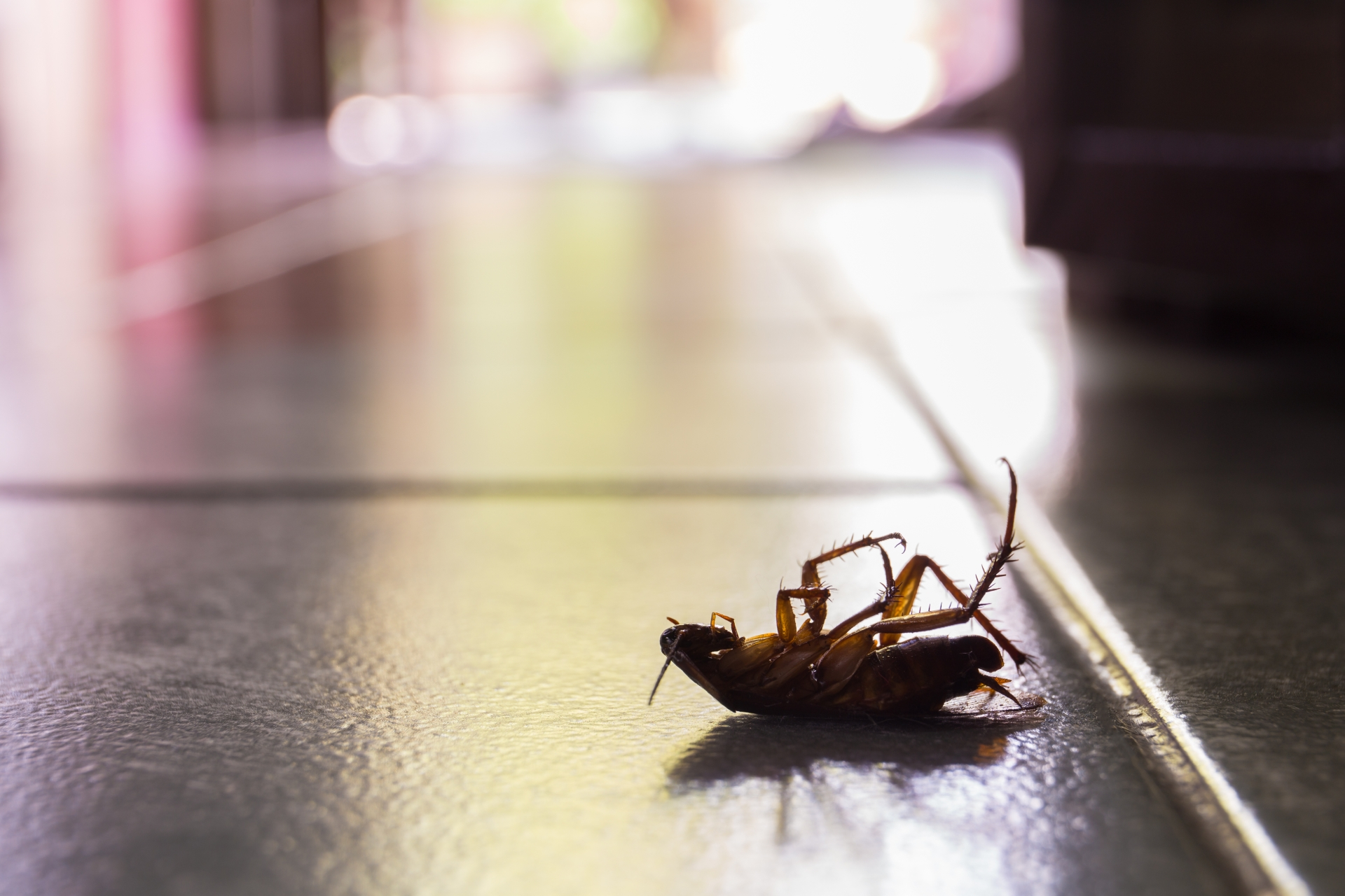 Cockroach Control, Pest Control in Hillingdon, Ickenham, UB10. Call Now 020 8166 9746